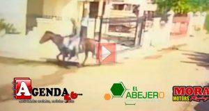 Ladrones-caballo