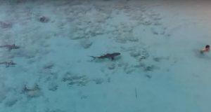 niño-salva-su-vida-tras-ser-rodeado-por-cuatro-tiburones