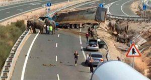 muere-elefante-al-volvar-camion