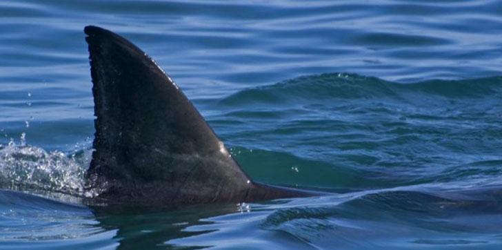 tiburon-muerde-a-hombre