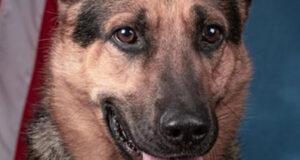 un-perro-de-la-dea